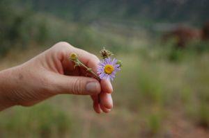 Simple Beauty