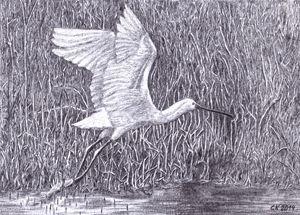The bird takes off