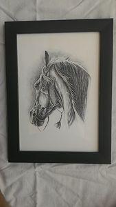 Black Horse Pencil Sketch