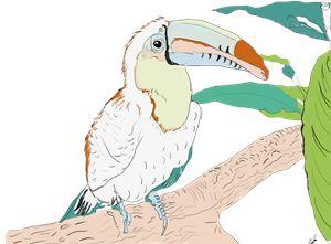 toucen parrot