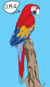 OMG parrot