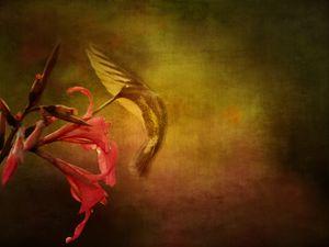Wings In Motion 3