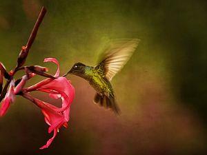 Wings In Motion 2