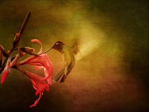 Wings In Motion 1