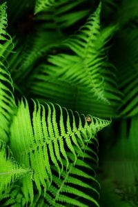 Beautyful young ferns leaves green f