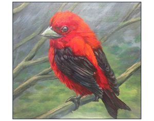 Scarlet Tanager - Keith Murray