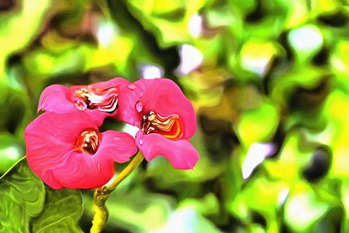 Red flowers with dew drops - Chandra