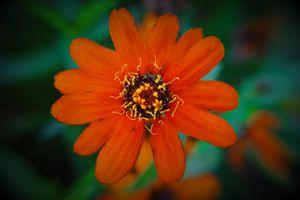 Late Fall Blossom