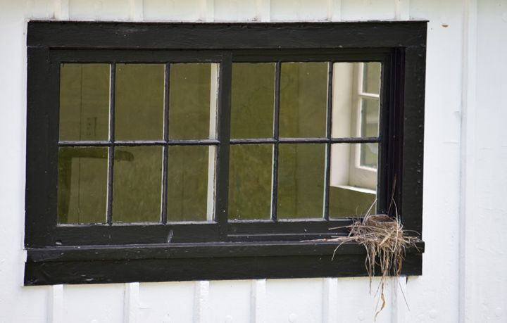Window Nesting - Thebert Photography