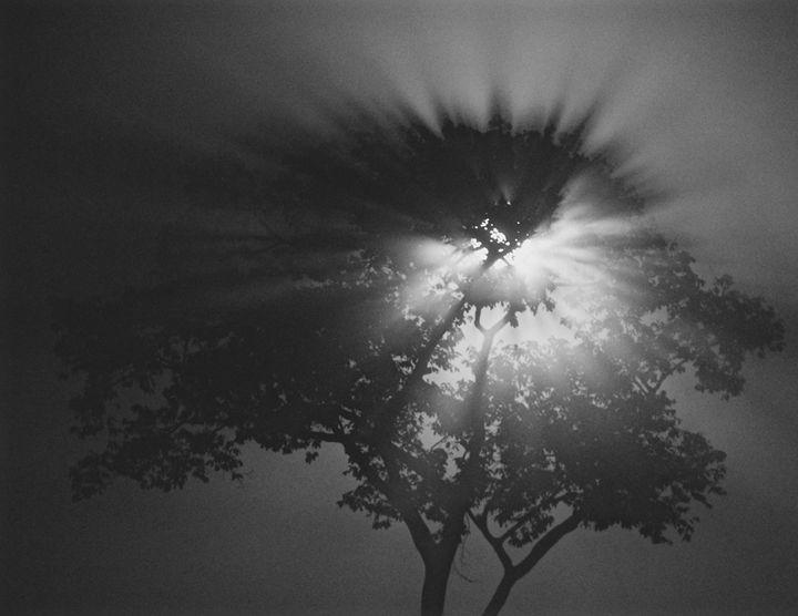 Moonshine - Thebert Photography