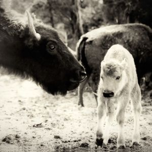 Mother's Love - Western Images