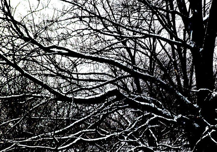 Branches - Wayne Bien