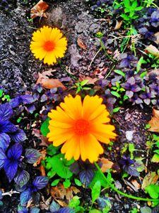 I will bloom