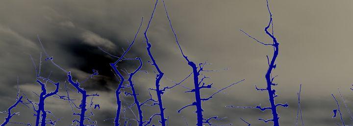 Blue Winter -  Mdohnalek