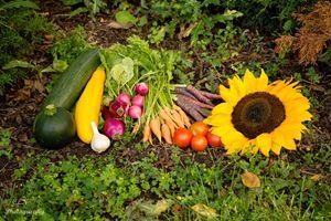 Fall Harvest 1 - C. Nowak