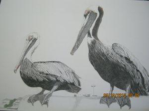 ceder key pelicans - lasting impressions artwork