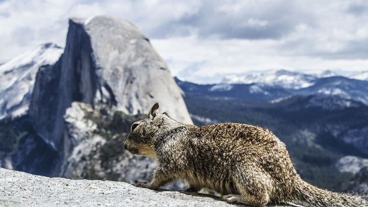 Squirrel on the edge - Jesse Redheart