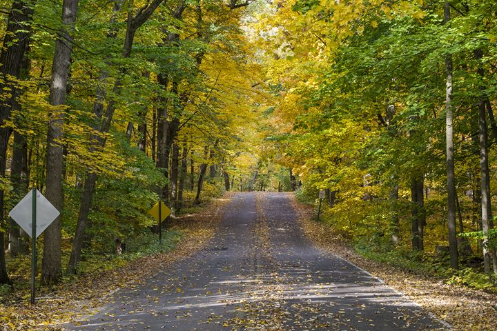 Arboretum Fall, Madison, Wisconsin - StevenRalserPhoto