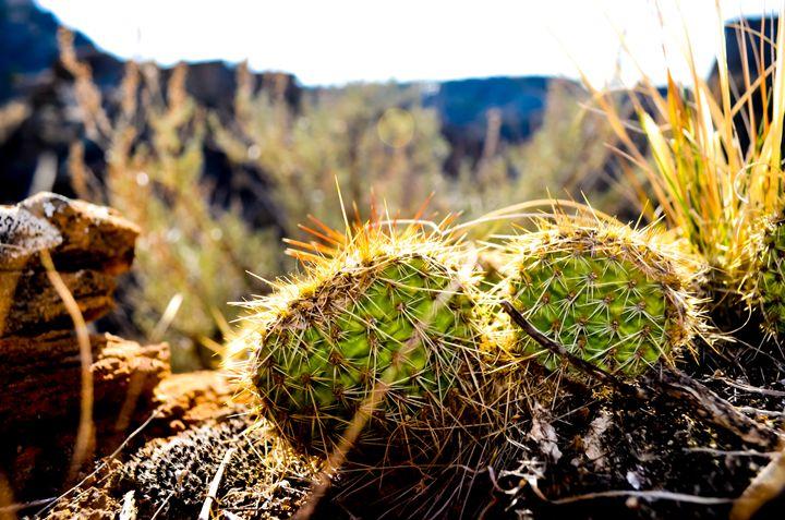 Cactus - Zelda's wonderland workshop.
