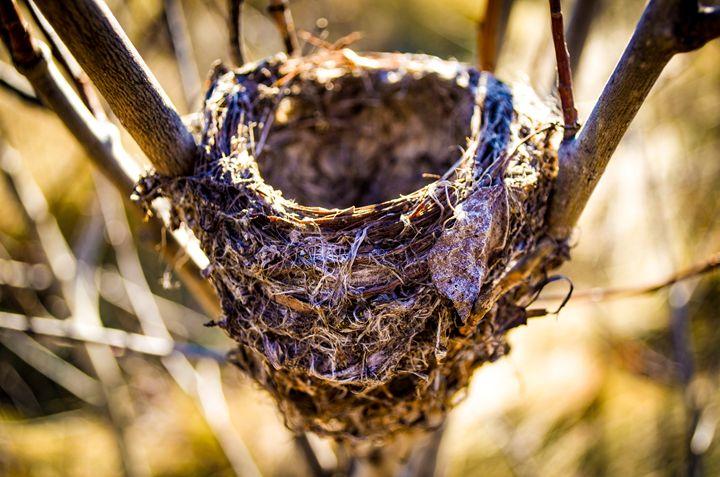 Birdless nest - Zelda's wonderland workshop.