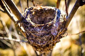Birdless nest