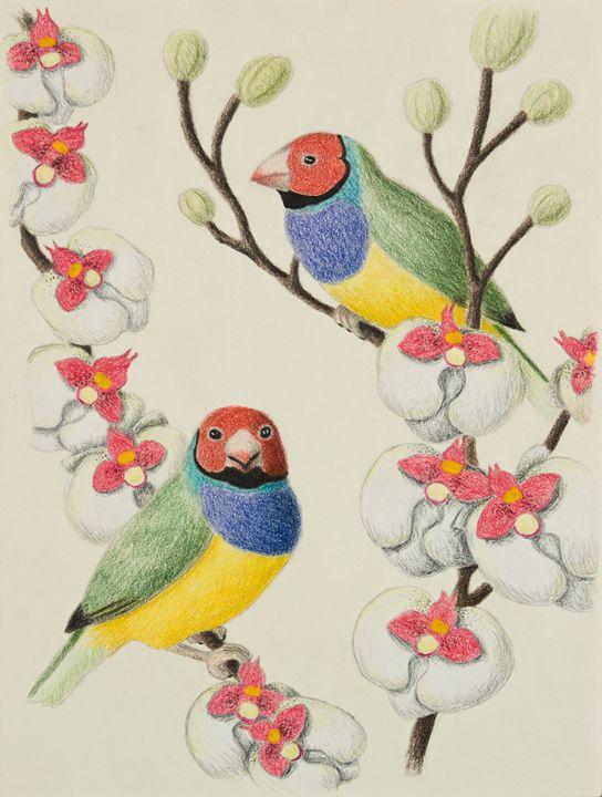 Gouldian Finch - JK Art Life