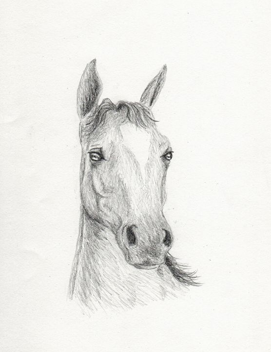Horse - JK Art Life