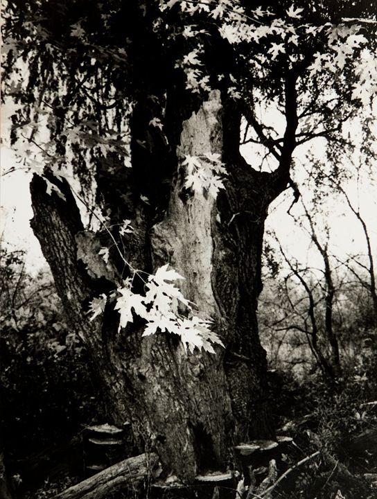 Willow Tree - JK Art Life