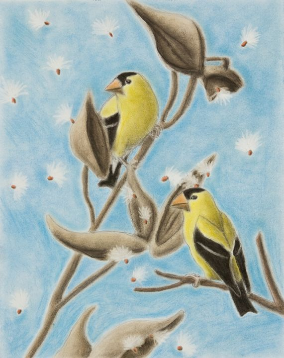 Goldfinch On Seed Pod - JK Art Life