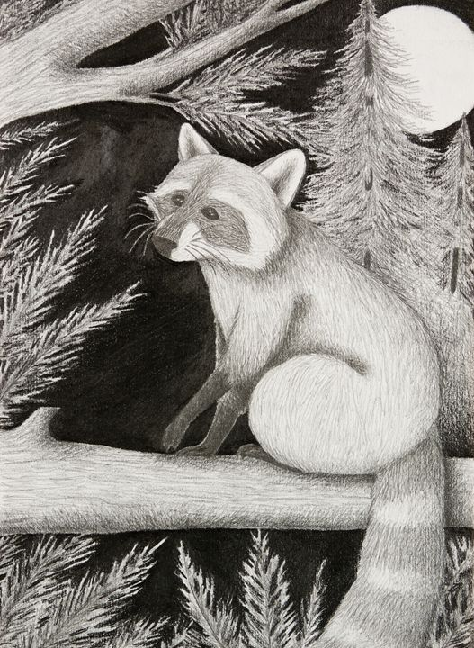 Raccoon - JK Art Life