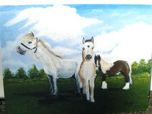 Maisie,Duke and Abu Rescue Ponies