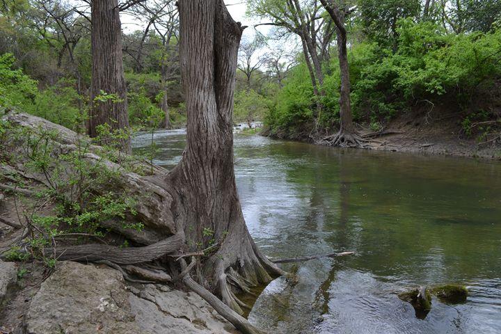 Tree by water - Brandon W. Ross