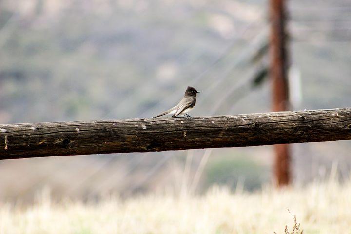 Song Bird - Nicole Ashly