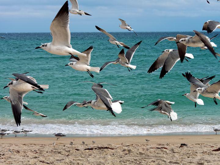 Flock of Seagulls Flying Over Beach - Jill Nightingale
