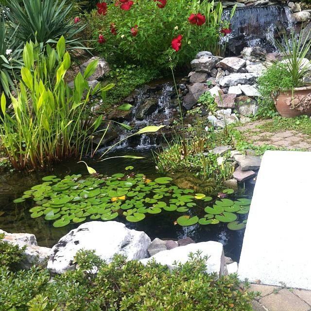 The pond - Indigo
