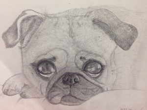 Pug doggo