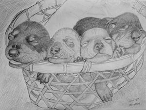 Puppies in the bucket