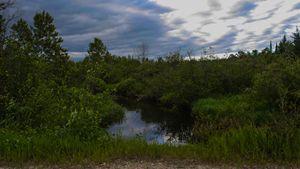 River Runs Wild