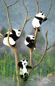 Pandas - Liu Miranda