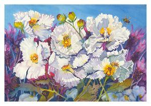 Full Sails - Matahito Poppies, Susan