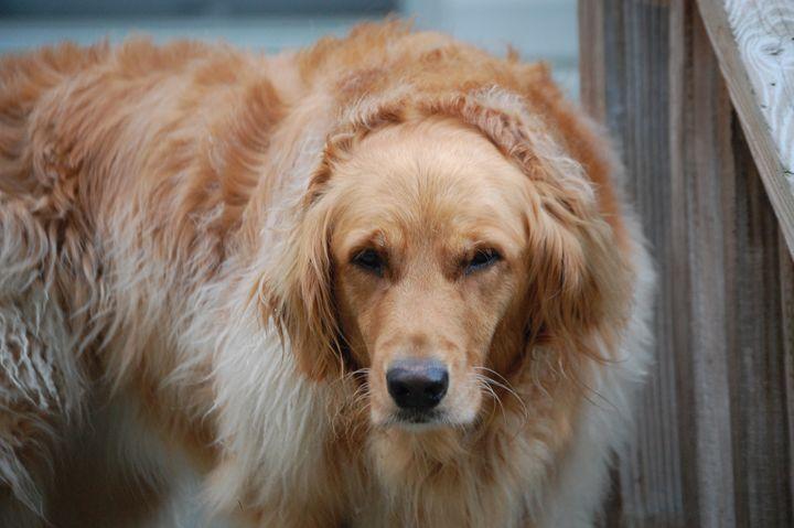 Doggy Days - Photography