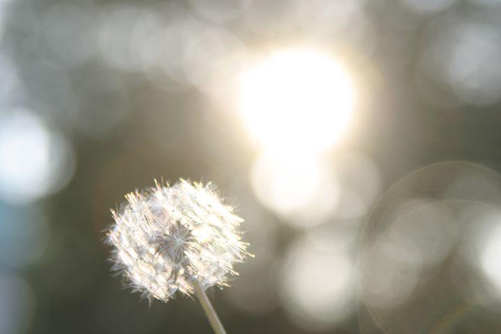 Daffodil - DMB Photography