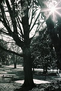 Sunburst in Trees