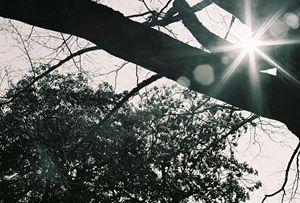 Sunstar Through Trees