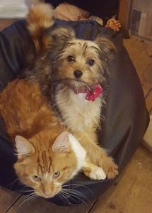 poppy and gizmo chilling