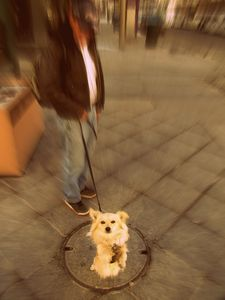 Dog and Manhole Cover