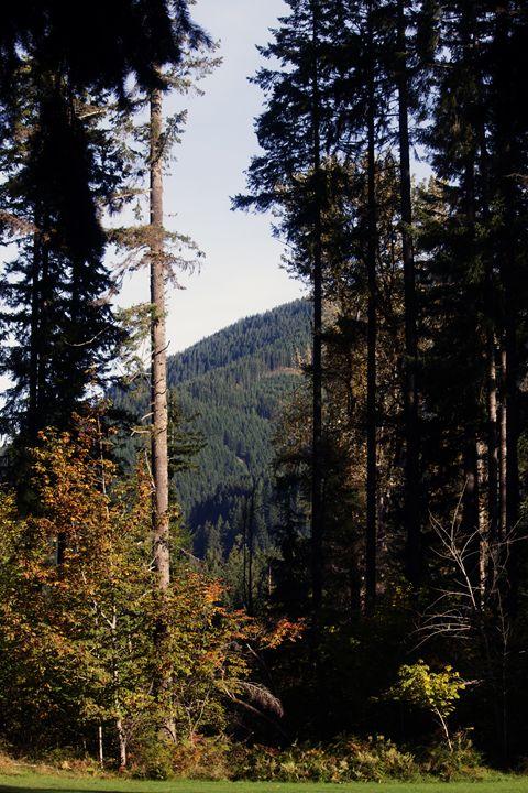 The View From Cispus - Washington Artwork
