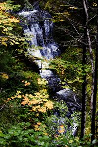 Above Covell Creek Falls