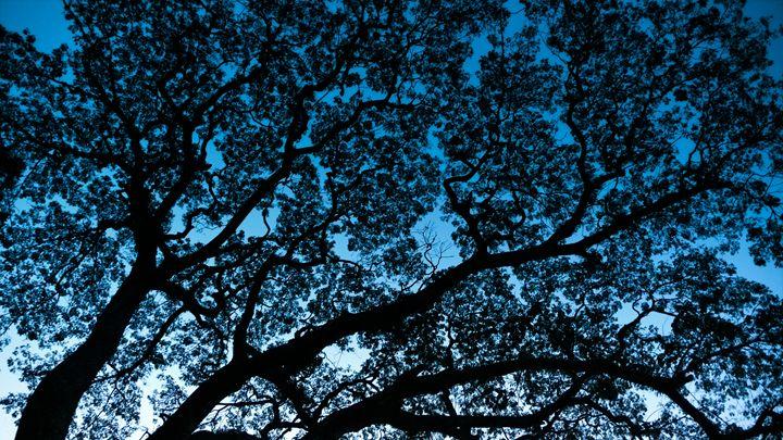 Tree of wisdom - For Lanie