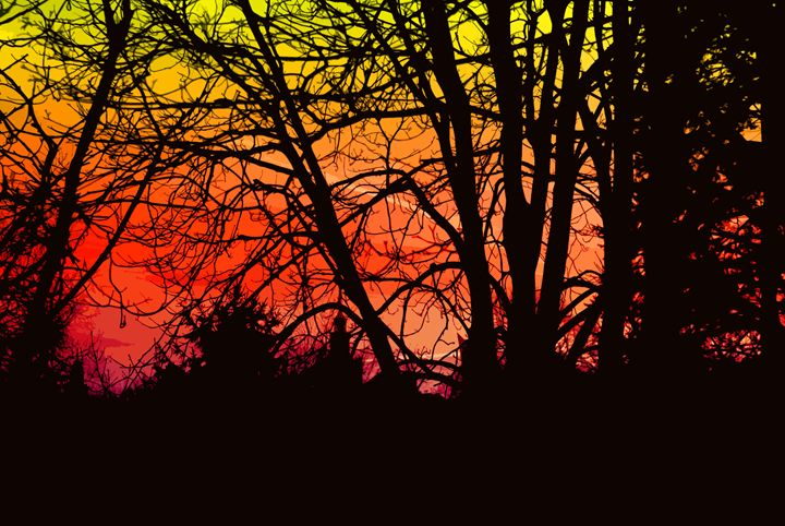 Sunsetting tree - Magdalena Ziemak